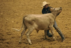 rodeo-646615_640