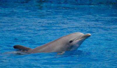 NASA: Denounce Abusive Experiment Involving Dolphin in Sexual Relationship with Human Handler