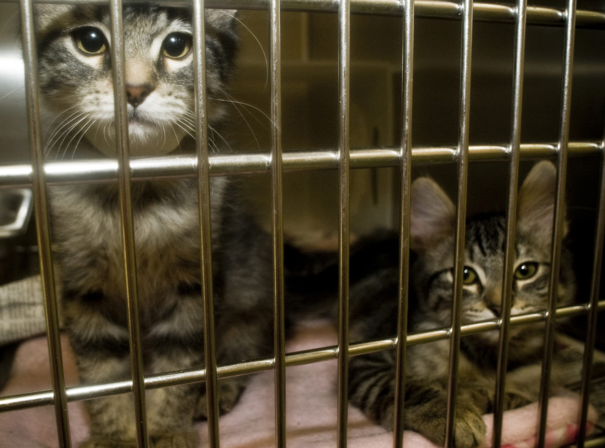 Justice For 20 Cats Dogs And Squirrels Found In Alleged