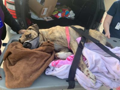 Dog Thrown From Pickup Truck in Rush Hour Traffic and Killed Deserves Justice