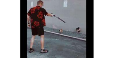 Chicken Allegedly Shot With Speargun Deserves Justice