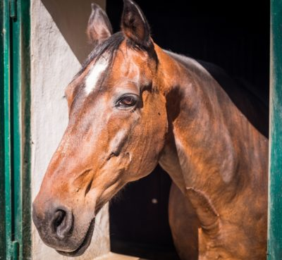 Horse Allegedly Beaten and Kicked With Spurs Deserves Justice