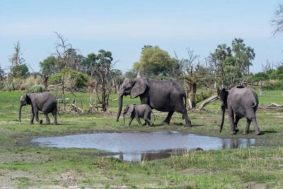 Solve Mystery of Mass Elephant Die-Off
