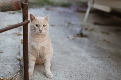China: Make Animal Abuse Illegal in the Face of Rising Cruelty