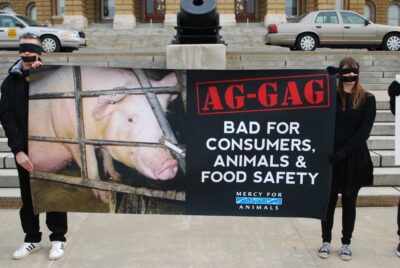 Allow Exposure of Animal Cruelty in Livestock Industry