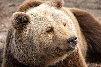 Don't Kill Bears for Protecting Their Homes