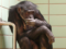 Stop Torturing Monkeys in Laboratory Experiments