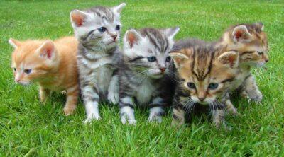 Four Kittens Allegedly Beaten to Death by Teacher Deserve Justice