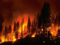 Save 'Animals on Fire' From Climate Change Driven Devastation