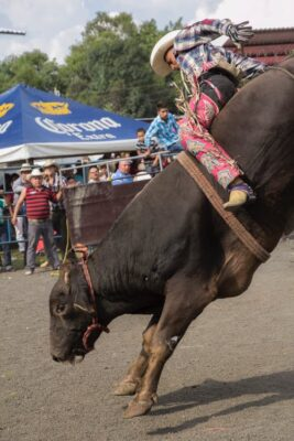 Make Barbaric Bullfighting a Crime